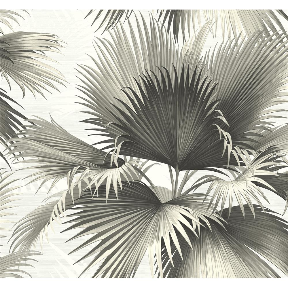 Kenneth James by Brewster PS40100 Palm Springs Endless Summer Black Palm Wallpaper