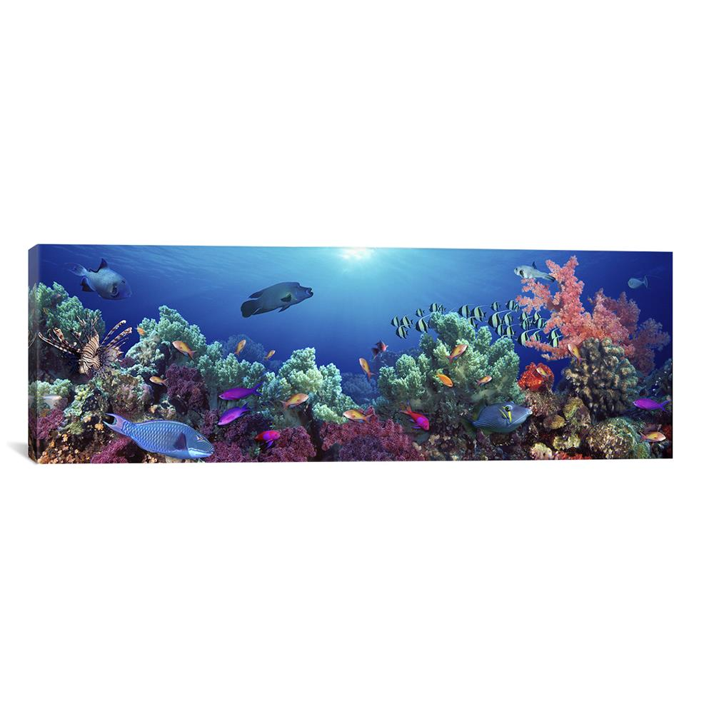 iCanvas PIM5751-1PC3-36x12 School of fish swimming near a reef, Indo-Pacific Ocean by Panoramic Images Canvas Print